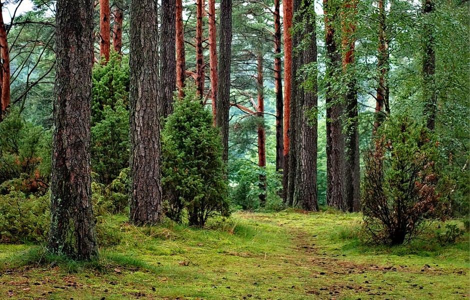 La biomasse végétale : l'énergie de l'avenir