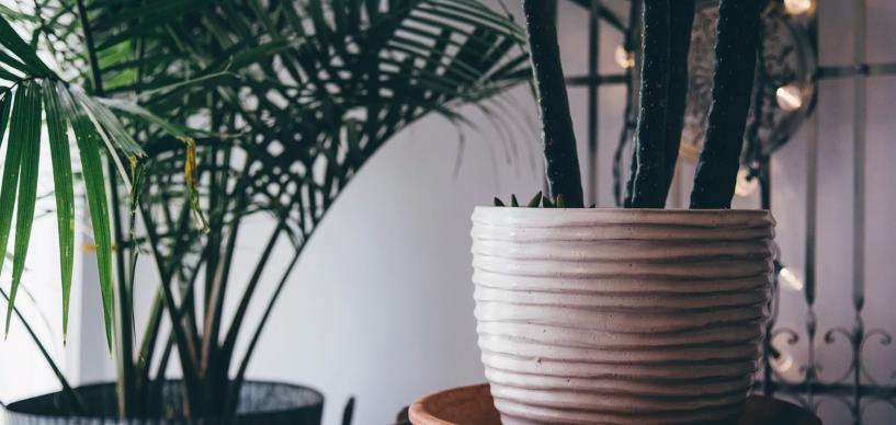 Comment acheter les plantes de manière plus écoresponsable ?
